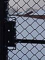 Auschwitz II Birkenau - panoramio - Angela Stefanoni (3).jpg