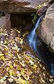 Autumn (6377666269).jpg