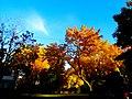 Autumn Colors in Madison - panoramio (16).jpg