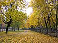 Autumn in Kyiv (1762573159).jpg