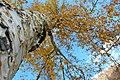 Autumn in Naltar Valley.jpg
