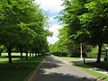 Avenue of Trees - geograph.org.uk - 817992.jpg