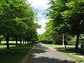 Avenue of Trees - geograph.org.uk - 817992.jpg