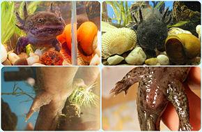 Πολλά ψάρια χρονολογίας site Καναδά