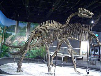 Coniacian - Bactrosaurus