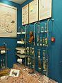 Baikal Limnology Museum (11553747104).jpg