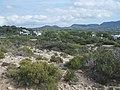Balearen, Ibiza, Wanderung NW Cala Codolar - Cala Comte - Punta de sa Torre - panoramio (1).jpg