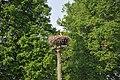 Baltā stārķa ligzda Nr.1144, Ārlavas pagasts, Talsu novads, Latvia - panoramio (1).jpg