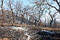 Bandipur Forest fire3 2019.jpg
