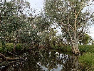 Barcoo River river