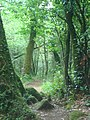 Barro Bosque - panoramio.jpg
