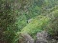 Bassin sur la rivière des marsouins - panoramio (1).jpg