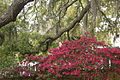 Baum und Busch in Florida CIMG2009.JPG
