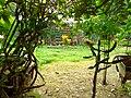 Beauty of Baldha Garden 2.jpg