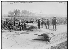 Belg. -- burying horses after battle LOC 6175434724.jpg