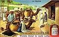 Berbères chercheurs de truffes vendant leur récolte sur le marché de Tunis.jpg