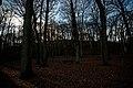 Bergen - Bergerbosch - Sparrenlaan - View West.jpg