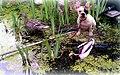 Besuch im Gartenteich - Bounthy passt auf ... - panoramio.jpg