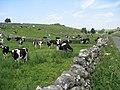Between Dalehouse Farm and Dyke Head Farm - geograph.org.uk - 1370660.jpg