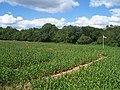 Bickleigh , The Maize Maze - geograph.org.uk - 1223804.jpg