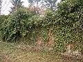 Bielsko-Biała, Cmentarz żydowski - fotopolska.eu (55336).jpg