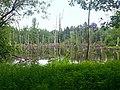 Biotop Brueggen.jpg