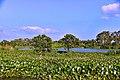 Bird Sanctuary Landscape.jpg