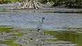 Birds in the Jamaer canal (31095574122).jpg