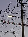 Birds on a Wire - Puerto Angel - Oaxaca - Mexico (6522786463).jpg