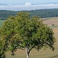 Blick ins nebelverhangene Maintal - panoramio (2).jpg