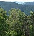 Blick vom Ludwigsturm - panoramio - Immanuel Giel (1).jpg