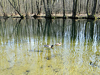 Blue Sources Nature Reserve in Tomaszow Mazowiecki - 11.jpg
