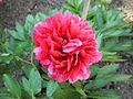 Blumen 4.JPG
