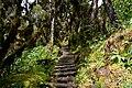 Board walk through forest.jpg