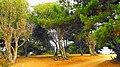 Bosque colorido - panoramio.jpg