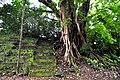 Botanic garden limbe98.jpg