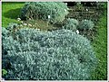 Botanischer Garten Freiburg - Botany Photography - panoramio (27).jpg