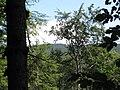 Boubín - vrchol z okružní cesty - panoramio.jpg