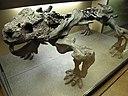 Bradysaurus im NHM Wien.JPG