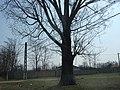 Bratia copac batran - panoramio.jpg