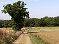 Bridleway and fields east of Hoplands - geograph.org.uk - 236933.jpg
