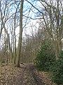 Bridleway through Knowle Wood - geograph.org.uk - 1778238.jpg