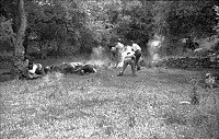 Civilians being shot during the Massacre.