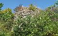 Burg Dellingen, Bräunlingen-Waldhausen 08.JPG