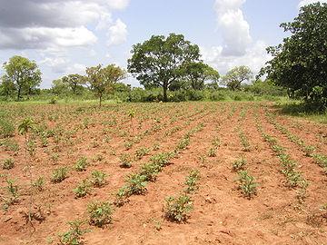 Reforestación en Tolotama, Burkina Faso