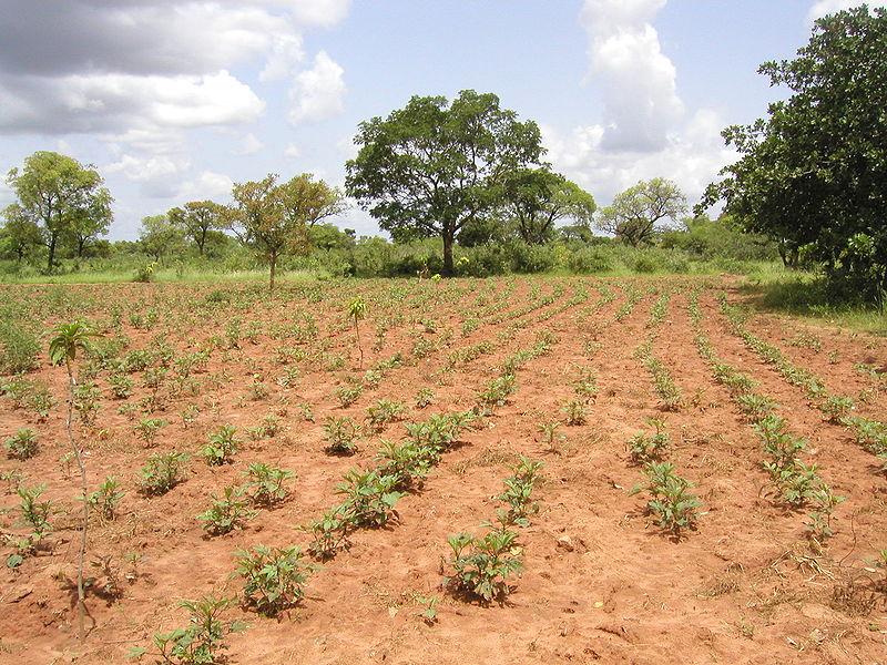 ���� ������� ����... 800px-Burkina_Faso_-_Tolotama_Reforestation.jpg