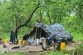 Cabane et effets de charbonier.jpg