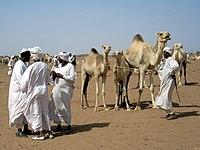 Camel Market (8626639754)