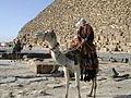Camel in Eqypt.JPG