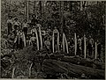 Canadian forest industries 1911 (1911) (19903187254).jpg